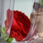 Leo en el amor, la pareja y el sexo